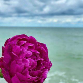 Какое же вкусное сочетание! Ода красоте природы… Всем вдохновения на будущую неделю 💙  #YuliyaKozda #ЮлияКозда #seaside #seaview #nature #colors #flowers #flower #flowerstagram #flowerslovers #peonies #peony #sea #sky #clouds #waves #beauty #beautiful #inspiration #природа #красота #вдохновение #море #волнение #пион #пионы